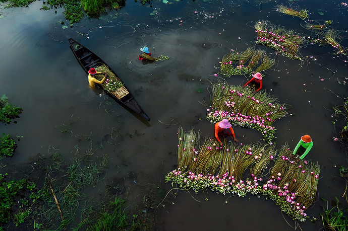 Collection of waterlilies